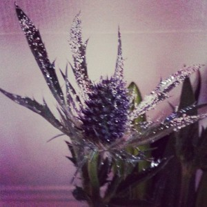 Love these sparkly thistles from M&S!